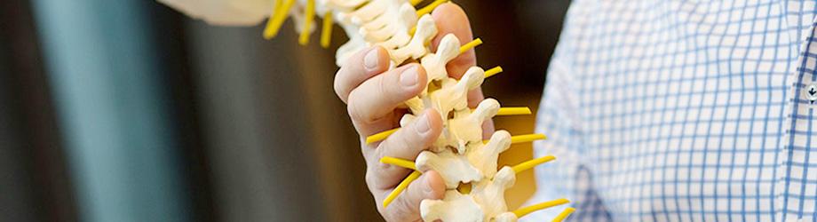 Chiropraktik DAGC Wirbelsäule